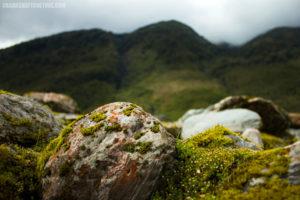 Moss in Franz Josef Glacier