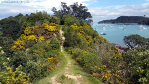 Beautiful surroundings in Waiheke Island, New Zealand. The main method to get there is by ferry.