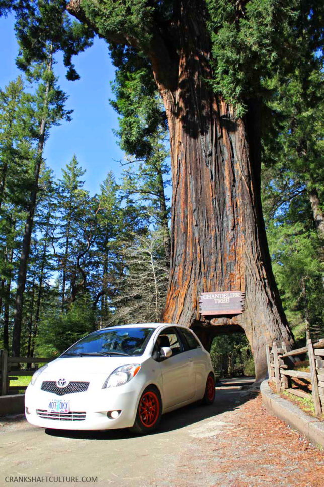 Yes, we drove through a tree in Leggett, CA, a mammoth redwood called the Chandelier Tree.