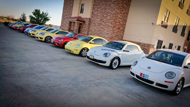 New Beetles at R2R 2019